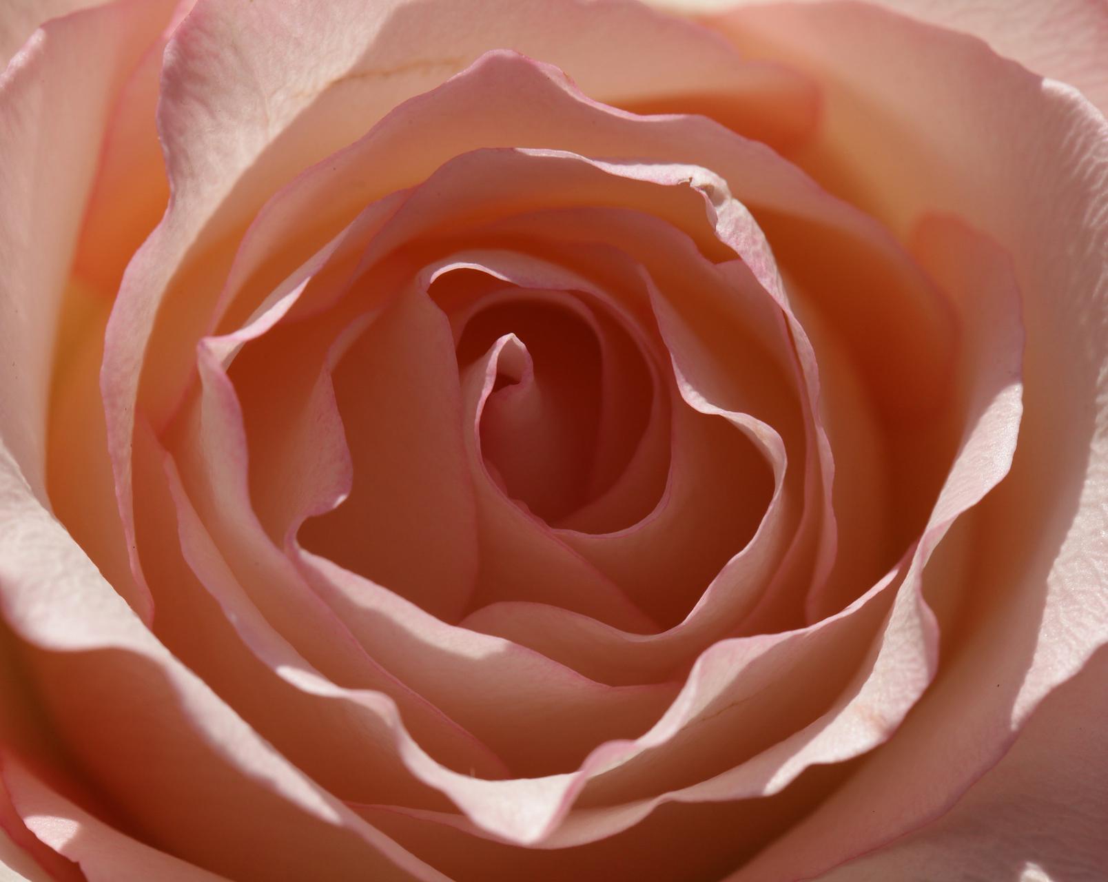 Rose-Libri-Musica-Vino